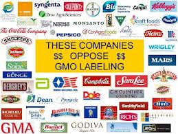 Long Term Effects Of Eating Genetically Modified Foods